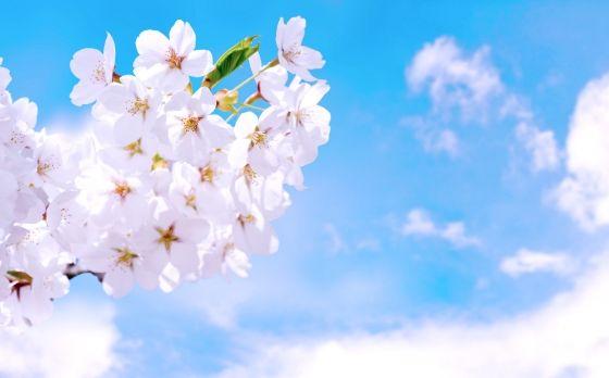 2019年4月1日から5日までのトライオートFXの利益【956円】